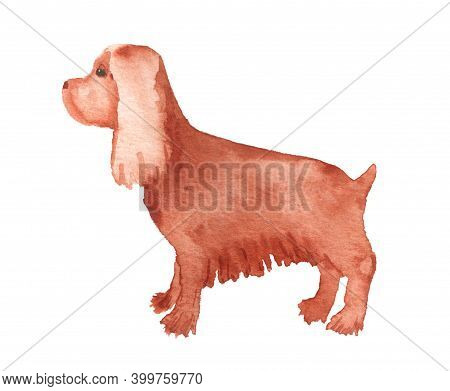Watercolor Image Of Spaniel. Hand Drawn Illustration Of Dog Isolated On White Background.