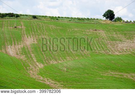 Lush Green Agriculture Field With Tree In A Lush Green Field.