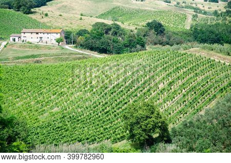 Amazing Springtime Colorful Landscape, Tuscany. Green Fields And Vineyards With Olive Trees In Tusca