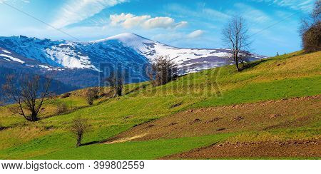 Rural Field On The Hill In Spring. Snow Capped Mountain In The Distance. Beautiful Carpathian Landsc