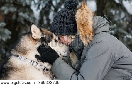 Alaskan Malamute Face To Face With Woman In Winter Forest. Close Up.