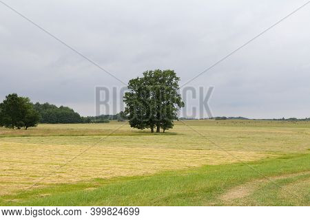 European Rural Landscape Landscape With Field And Trees.