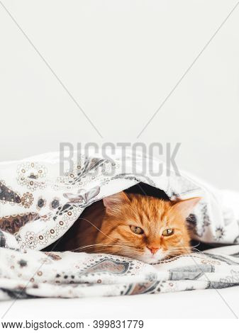 Cute Ginger Cat Lying Under Blanket In Bed. Fluffy Pet Comfortably Settled To Sleep. Cozy Home Backg