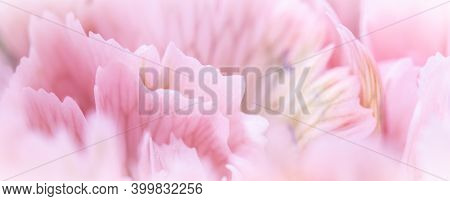 Retro Art, Vintage Card And Botanical Concept - Abstract Floral Background, Pale Pink Carnation Flow