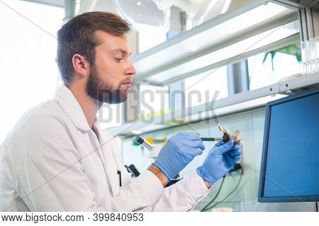 Archaeologist Working In Natural Research Lab. Laboratory Assistant Cleaning Animal Bones. Archaeolo