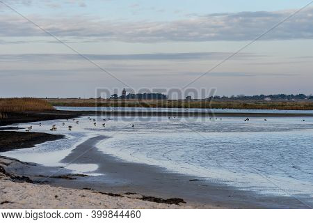 A Sandy Shoreline At A Beautiful Nature Reserve. Picture From Falsterbo In Scania, Southern Sweden