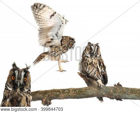 Collage With Photos Of Beautiful Eagle Owl On White Background