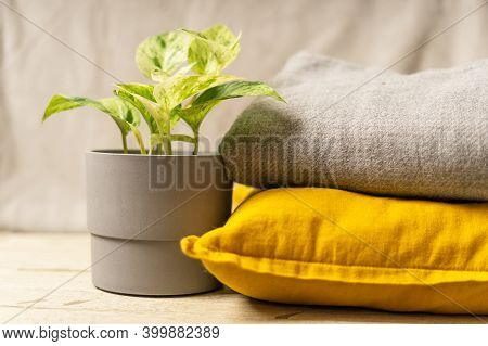 Plant, Pillow And Plaid In Trendy Yellow And Gray Colors . Illuminating Yellow And Ultimate Gray, Ne