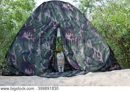Funny Fat Gray Cat In A Tent. The Cat Cautiously Looks Out Of The Tent. Traveling With A Cat. Concep