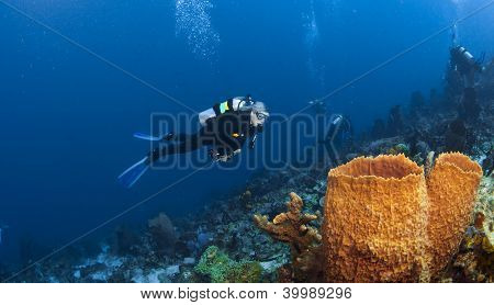 Diver And Orange Sponges In St Lucia