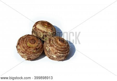 Taro Roots Or Colocasia Esculenta Rhizome Isolated On White Background With Copy Space For Texts