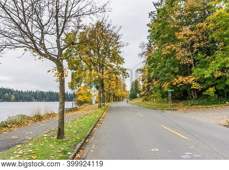 Autumn Tree And Leaves On The Shoreline Of Lake Washington In Seattle.