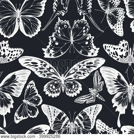 Seamless Pattern With Hand Drawn Chalk Giant Swordtail, Lemon Butterfly, Red Lacewing, African Giant