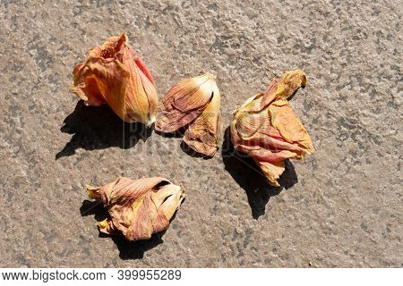 Faded Flowers On The Ground Horizontal Composition