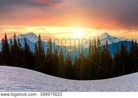 Majestic View Of Carpathian Mountains At Sunset. Valley Covered With Clean Snow, Dense Evergreen For
