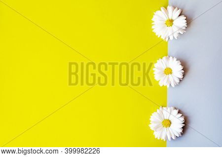 Chamomile Background In Trending Color 2021. Trending Color Combinations Of 2021.