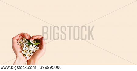 Women\'s Hands With Heart-shaped Palms And White Apple Blossoms On A Champagne Pink Background. Spri