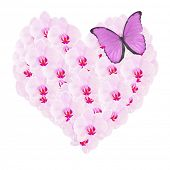 heart from pink orchid flowers and butterfly isolated on white background poster