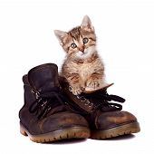 Kitten and boots on a white background poster
