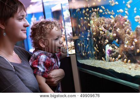 Mother and son are watching the fishes in aquarium poster