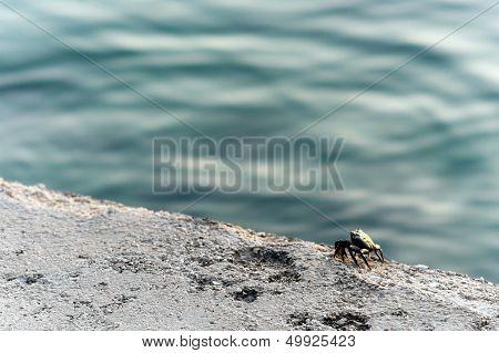Small Crab