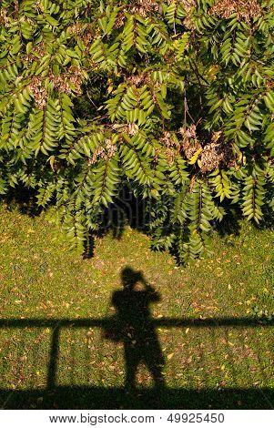 Photographer's Shadow