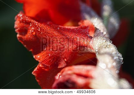 Bloom - water drops