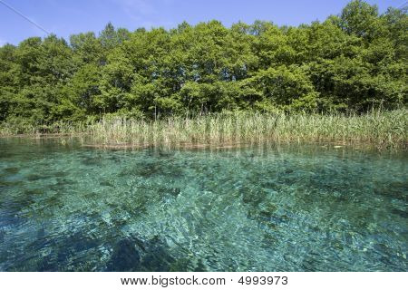 Clear Blue Spring