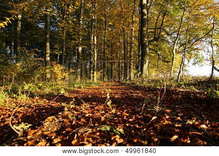 Track in fall forest