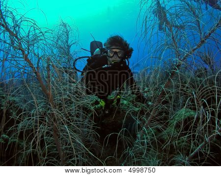 Woman Scuba Diver Surrounded By Underwater Marine Life