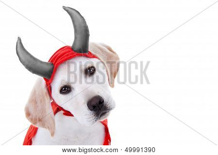 Halloween Labrador puppy dog dressed up in devil costume on white with copy space