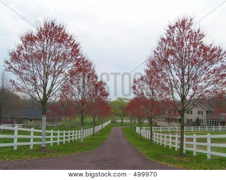 Country Estate With Budding Trees