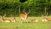 Red deer in the New Forest Hampshire England poster
