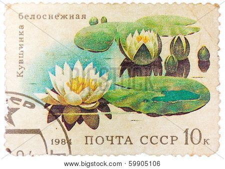 Stamp From The Ussr Shows Image Of Water Lilies