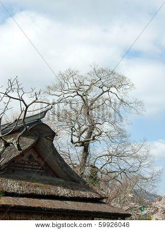 Dry Tree.