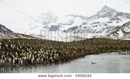 A King Penguin colony and stunning mountain scenery - South Georgia. poster