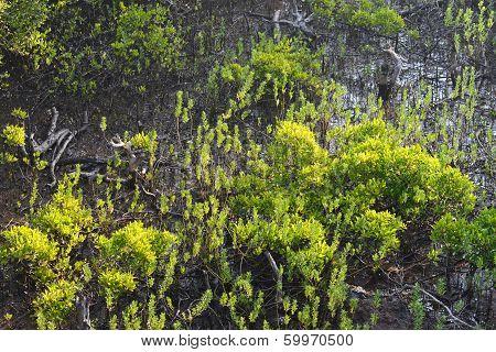 New growth mangrove swamp