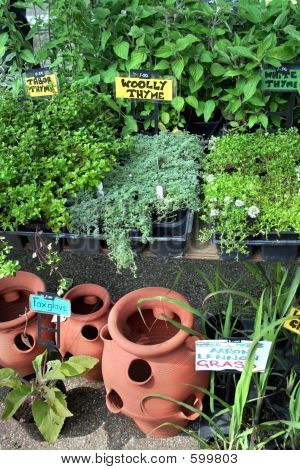 Ceramic Pots And Fresh Herbs