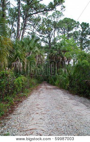 Old Rural Dirt Road