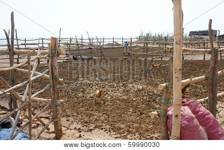 People Dry Cow Pat To Make Muck
