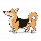 Welsh corgi terrier with black back. Queen dog.Vector illustration. poster
