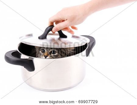 Fluffy kitten in pan, isolated on white poster