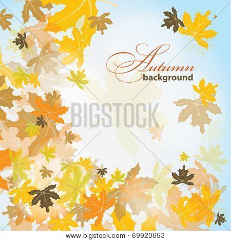 Maple autumn background, vector illustration