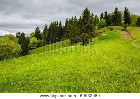 Pine Trees Near Valley On Mountain Slope