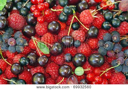 Assorted Berries (raspberries, Black And Red Currants, Saskatoon, Cherry, Gooseberry) As Background