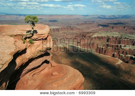 Canyonlands View