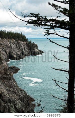 Bold Coast Treeline