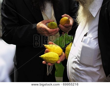 Religious Jews chooses ritual plant - citron- on the bazaar on the eve of Sukkoth. September 22, 2010, Sukkoth market, Bene Brak, Israel