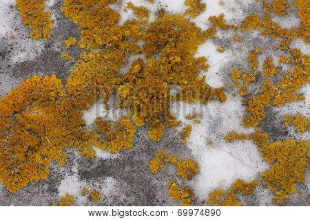 Green moss growing on grey marble gravestone textured background poster