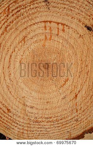 Log Background